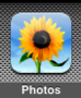 kb:sunfloweriphoto.png